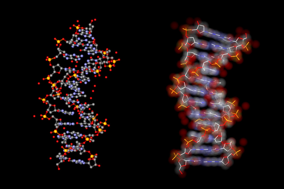 B form DNA 3D-CGI visualisation